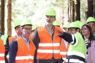 Explicación ó rei dos traballos forestais.