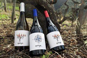 Os tres viños que comercializan na actualidade na Adega Sidrón