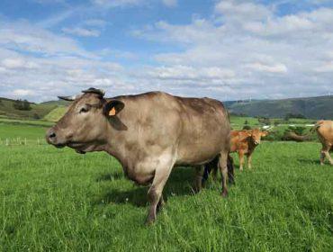 Importes provisionales de las ayudas asociadas para ganadería