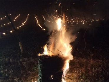Bodegas Martín Códax ensaya en sus viñedos de Monterrei el efecto de las velas contra las heladas