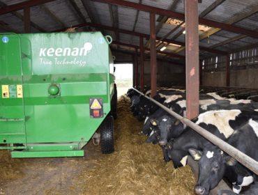 Evitar o contaxio de IBR e BVD: como actúan as granxas en Galicia e en Cataluña?