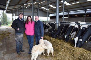 Connory Farm: Retrato dunha granxa típica de vacún de leite en Irlanda