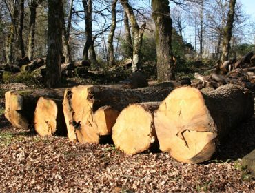 La Asociación Forestal de Galicia celebra este sábado su Asamblea General