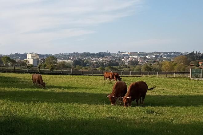 Perigan as axudas agroambientais, de incorporación e de plans de mellora no 2020 e 2021