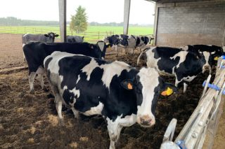 Así será o rabaño de vacas da Granxa Experimental de Vacún de Leite do Campus Terra