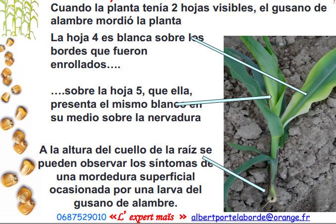arame_verme_millo_laborde_11