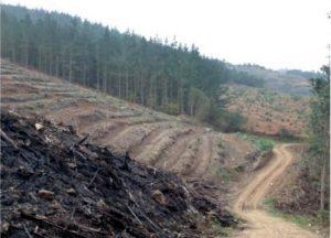 Unha das cortas levadas a cabo nos últimos anos no monte Xalo