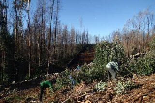 'O porqué do movemento deseucaliptizador: alternativas para o Plan Forestal de Galicia'