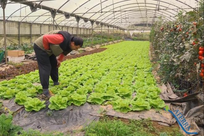 Coronavirus: O Goberno confirma que a agricultura, gandaría, industria alimentaria e forestal poden seguir traballando