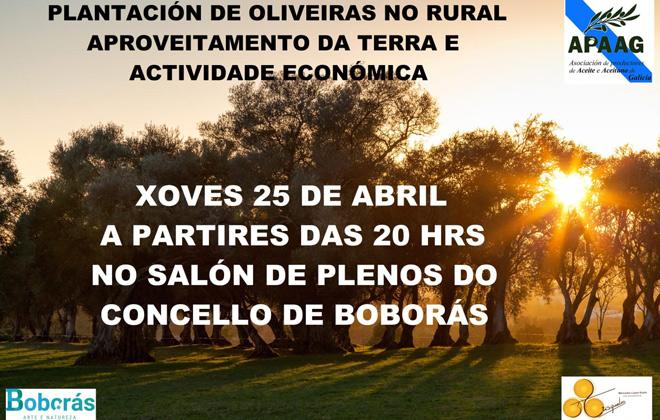 oliveiras-boboras__