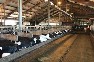 10 claves del sector lácteo en Alemania, el primer productor de la Unión Europea