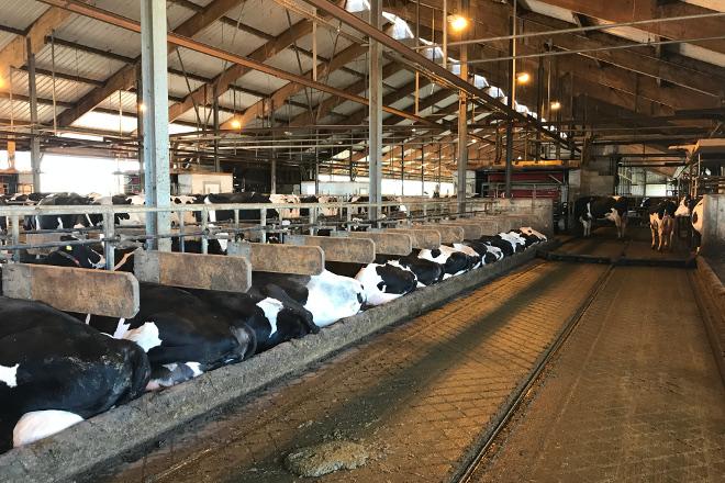 10 claves do sector lácteo de Alemaña, o primeiro produtor da Unión Europea