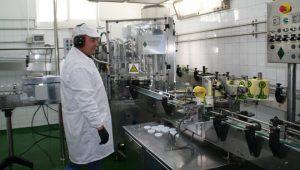 Proceso de envasado do Kéfir nas instalacións da cooperativa Loureiro.
