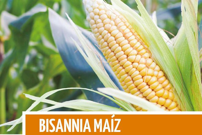Bisannia Maíz: El fertilizante específico para asegurar la cosecha de maíz forrajero