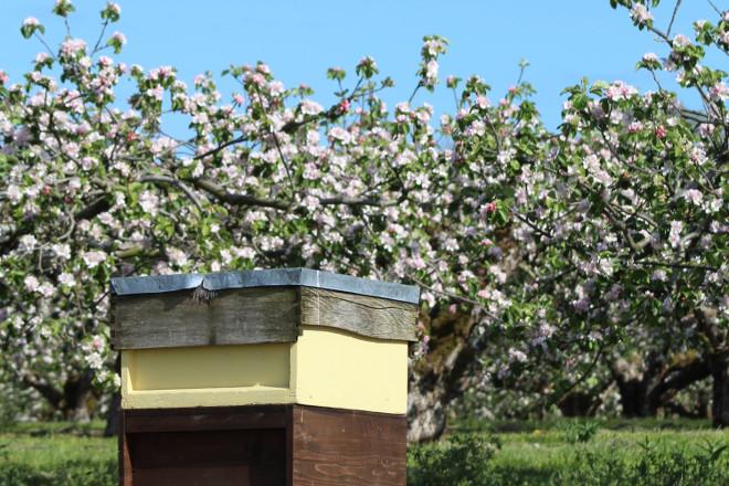 Xornada sobre as vantaxes de combinar apicultura e fruticultura