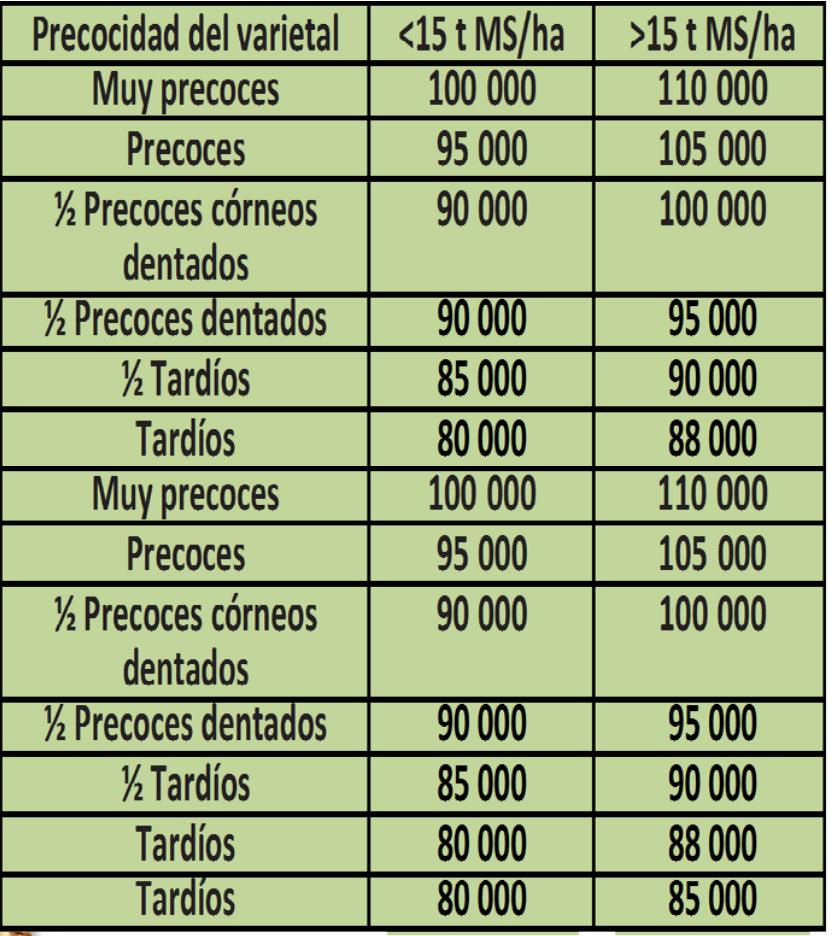 millo_resembra_1