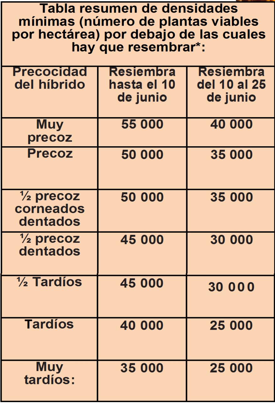 millo_resembra_2