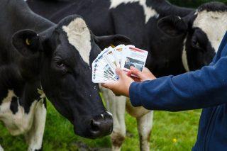 Último día para inscibirse no curso de mellora da eficiencia da conversión da ración en leite