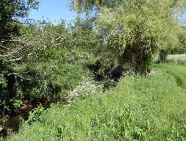 Augas de Galicia requírelle a gandeiros a plantación de ameneiros á beira de regatos
