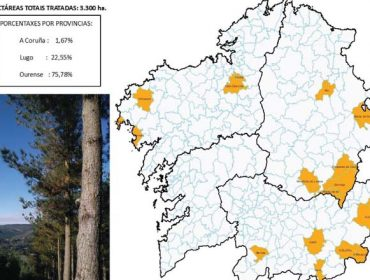 Ourense concentra o principal impacto da procesionaria do piñeiro en Galicia