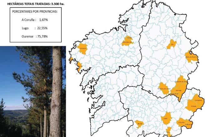 Ourense concentra el principal impacto de la procesionaria del pino en Galicia
