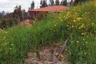 Robo de castaños recién plantados en el monte vecinal del Viso