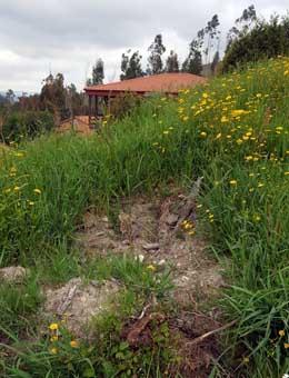 Roubo de castiñeiros recentemente plantados no monte veciñal do Viso
