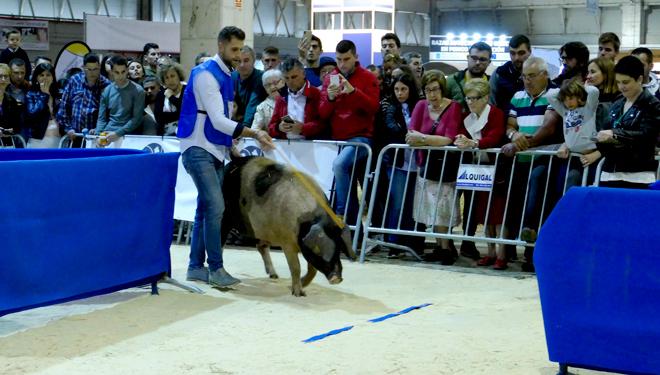 1-premio-manexadores-de-cerdo-celta-Semana-Verde-