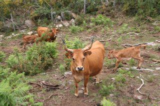 Obradoiro sobre comunidades de montes veciñais en Valdeorras