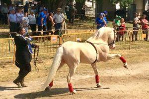 Demostración de doma na Feira do Cabalo de Adai