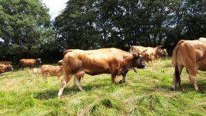 Gandaria-Lameiro-A-Veiga-Vacas-