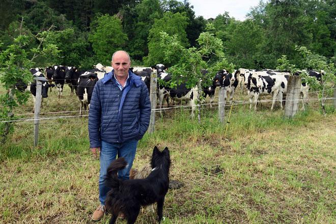 José María, no momento de ir buscar as vacas ao prado, acompañado de Calcetines, o seu can