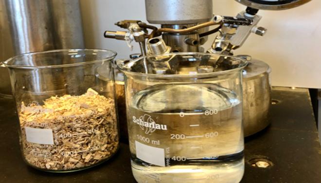 O eucalipto nitens amosa potencial para o seu procesado en biorrefinerías