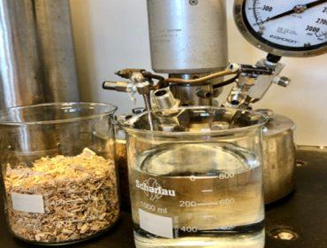 El eucalipto nitens muestra potencial para su procesado en biorrefinerías