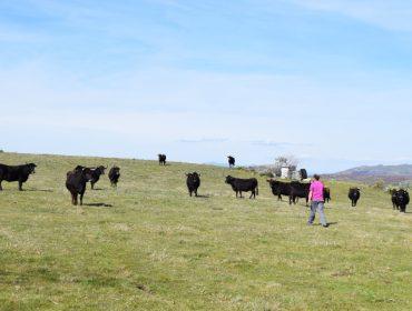 Os gandeiros e agricultores poderán cobrar a PAC 2020 a partir do 16 de outubro