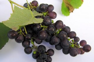 Confirman que a pel da uva tinta frea a extensión dos melanomas