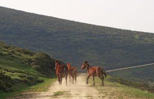 Os cabalos pacen en liberdade nas 245 hectáreas da comunidade de montes