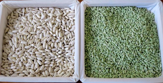 Faba branca e faba verdina producidas no Val de Lourenzá