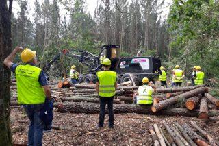O sector forestal galego en cifras
