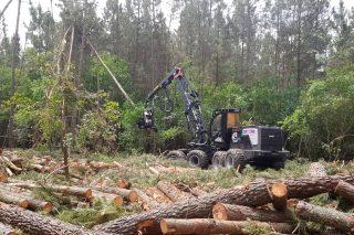Organizacións silvícolas e da madeira defenden o consenso acadado no Plan Forestal
