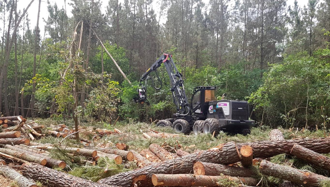 ¿Cómo se regularán las declaraciones y autorizaciones de tala?