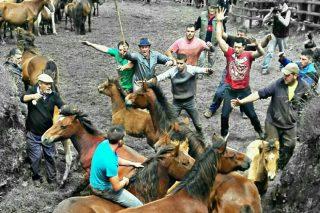 Campo do Oso estrea o domingo 30 a tempada de rapas en Galicia