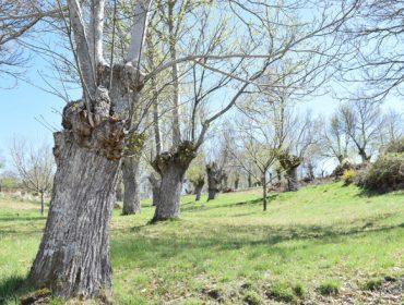 Guía completa sobre plantacións de castiñeiro: os tres modelos silvícolas