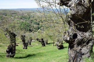 """Curso de verán sobre """"Os bosques antigos como refuxio de biodiversidade"""""""