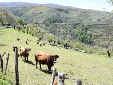 Polémica por unha carta de Medio Rural a beneficiarios de axudas agroambientais