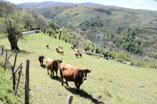 As medias verdades sobre o impacto ambiental da gandaría