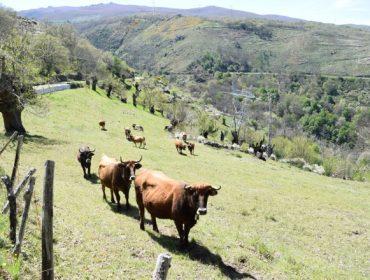 Las medias verdades sobre el impacto ambiental de la ganadería