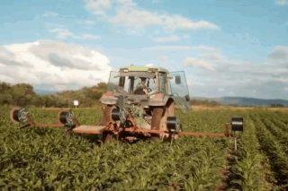 Vídeo: Así se instala na Limia o regadío por goteo para o millo