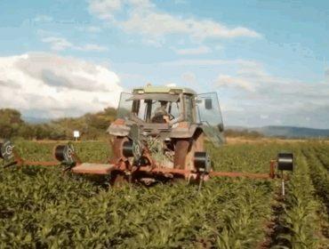 Vídeo: Así se instala en A Limia el regadío por goteo para el maíz
