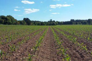 Charla online sobre manexo na sementeira do millo